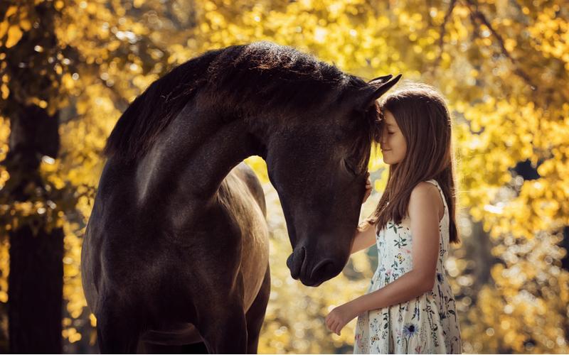 poitieve effecten van paarden op kinderen