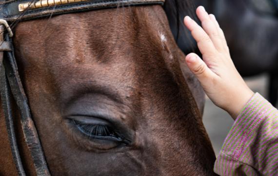 De 9 positieve effecten van paarden op kinderen