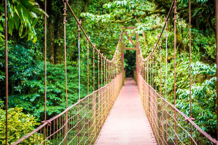 hangbrug costa rica jungle vakantie